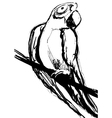 Parrot hand drawn sketch vector image