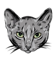 Portrait of Domestic Russian Blue Cat Cute vector image vector image