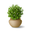 plant with flowers in vase vector image