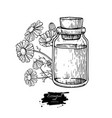 chamomile essential oil bottle and bunch of vector image vector image