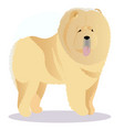 chow chow dog tricolor vector image