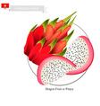 Dragon Fruit A Famous Fruit in Vietnam vector image vector image