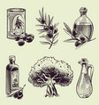 hand drawing olives vintage olive branches oil vector image vector image