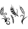 Wheat and rye vector image vector image