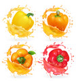 colored yellow red orange bulgarian peppers vector image