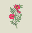 detailed botanical drawing of gorgeous dog roses vector image vector image