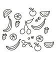 fruit stroke line hand drawn design on white vector image