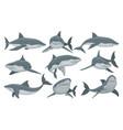swimming shark set sea animal fish vector image