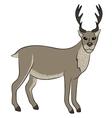 young wild deer vector image vector image