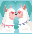 couple llama falling in love greeting card vector image vector image
