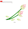 Lotus or Water Lily National Flower of Vietnam vector image vector image