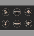 set gold icons with insects on black vector image vector image