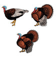 set turkey isolated on white background design vector image vector image