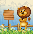A lion in the forest and the empty signboard vector image vector image