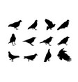 black and white silhouette dove crow isolated vector image vector image