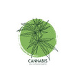 cannabis logo template hand drawn hemp leaves vector image