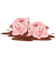 pig playing with mud vector image vector image
