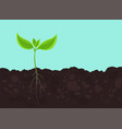 seedling germination young plant shoot sprout on vector image