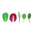 set of salad greens mix of salad leaves vector image
