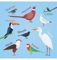 Bird set cartoon colorful eps vector image vector image