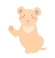 cute lioness lion cub on a white background flat vector image