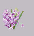 lily flowers spring season vector image