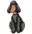 poodle dog with black fur vector image vector image