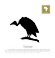 black silhouette a vulture on white background vector image vector image