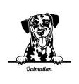dalmatian peeking dog - head isolated on white vector image vector image
