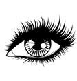 eye with black long eyelashes vector image vector image