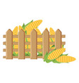 Fence with fresh corn cobs vector image
