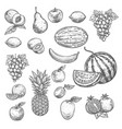 sketch fruits isolated icons vector image vector image