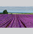 bright lavender field with bushes trees and blue vector image vector image