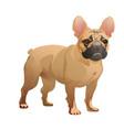 french-bulldog-02 vector image