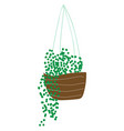 green plants hanging in flower pot on white vector image vector image