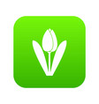 tulip icon digital green vector image vector image