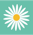 white daisy chamomile cute round flower plant vector image vector image