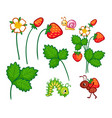 collection with wild plants vector image