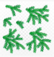 firtree branch set isolated on transparent vector image