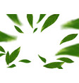 green falling tree leaves abstract modern vector image