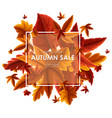 background design for autumn sale vector image vector image
