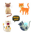 cats set characters cute cat meow vector image