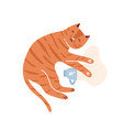 childish red cat portrait with heart paws cute vector image vector image