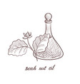 drawing beech nut oil vector image vector image