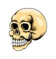 grunge head skull with teeth for logo vector image