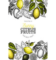 lemon tree design template hand drawn fruit vector image vector image