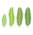 tropical plant banana leaf isolated on white vector image