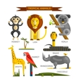 Tropical animals set in flat style design vector image