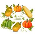 autumn colorful pumpkins frame fall season vector image vector image