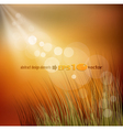 background with grass vector image vector image